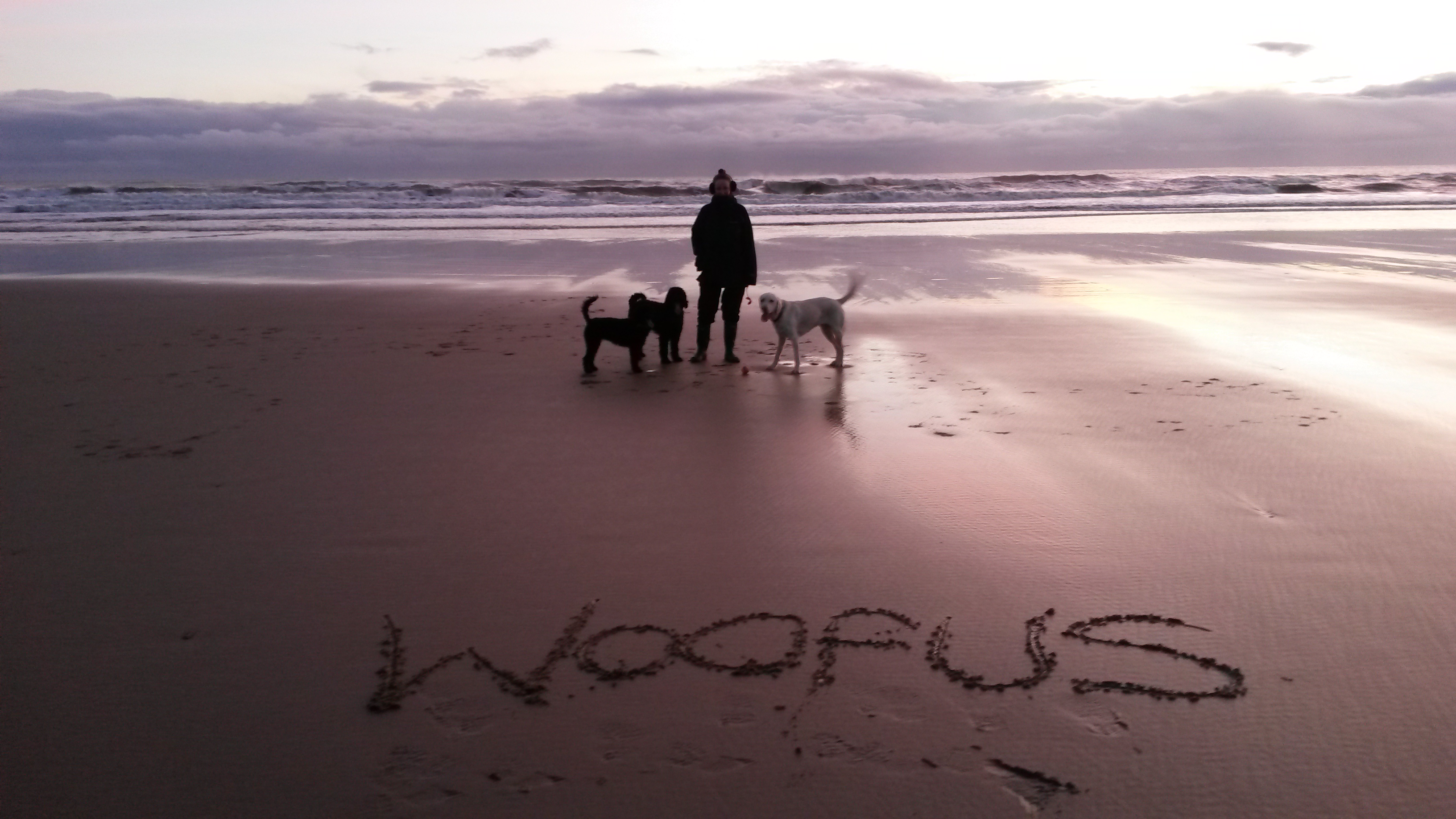 Woofus Dog Walking North Shields Woofus Dog Walking Tynemouth Woofus Dog Walking Cullercoats Woofus Dog Walking Whitley Bay Woofus Dog Walker North Shields Woofus Dog Walker Tynemouth Woofus Dog Walker Cullercoats Woofus Dog Walker Whitley Bay  Woofus Dog Walker Tynemouth, North Shields, Cullercoats, Whitley Bay Woofus Dog Walking Tynemouth, North Shields, Cullercoats, Whitley Bay Woofus Dog Boarding Tynemouth, North Shields, Cullercoats, Whitley Bay