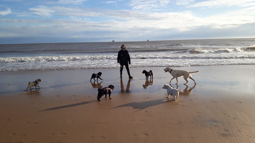 Woofus Dog Walker Tynemouth, North Shields, Cullercoats, Whitley Bay