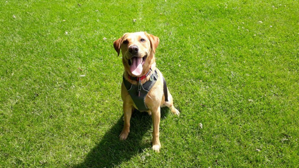 Dog Boarding North Shields Dog Boarding Tynemouth Dog Boarding Cullercoats Dog Boarding Whitley Bay