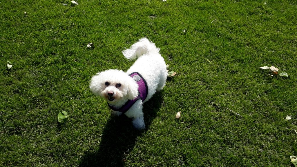 Dog Walker Tynemouth, North Shields, Cullercoats, Whitley Bay Dog Walking Tynemouth, North Shields, Cullercoats, Whitley Bay Dog Boarding Tynemouth, North Shields, Cullercoats, Whitley Bay