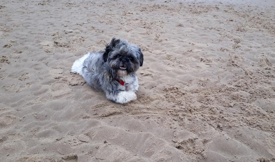 Dog Boarding Tynemouth