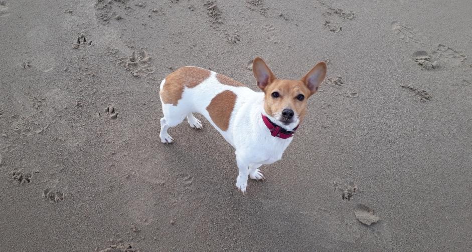 Dog Boarding North Shields