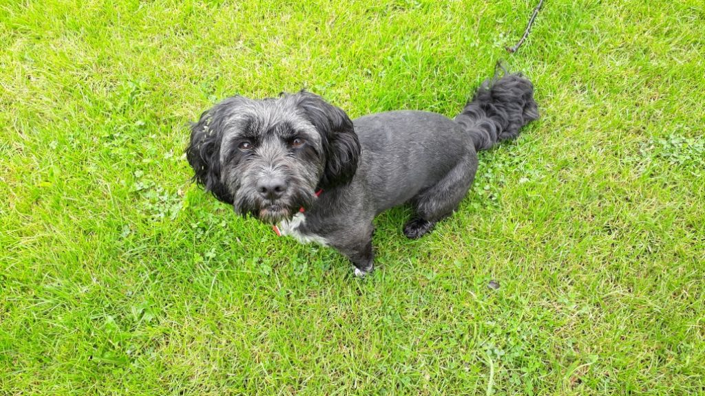 Dog Walking North Shields