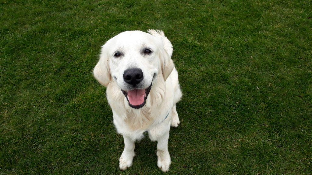 Woofus Dog Walking North Shields