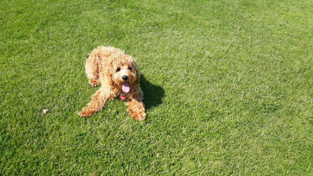 Woofus Dog Walking Cullercoats