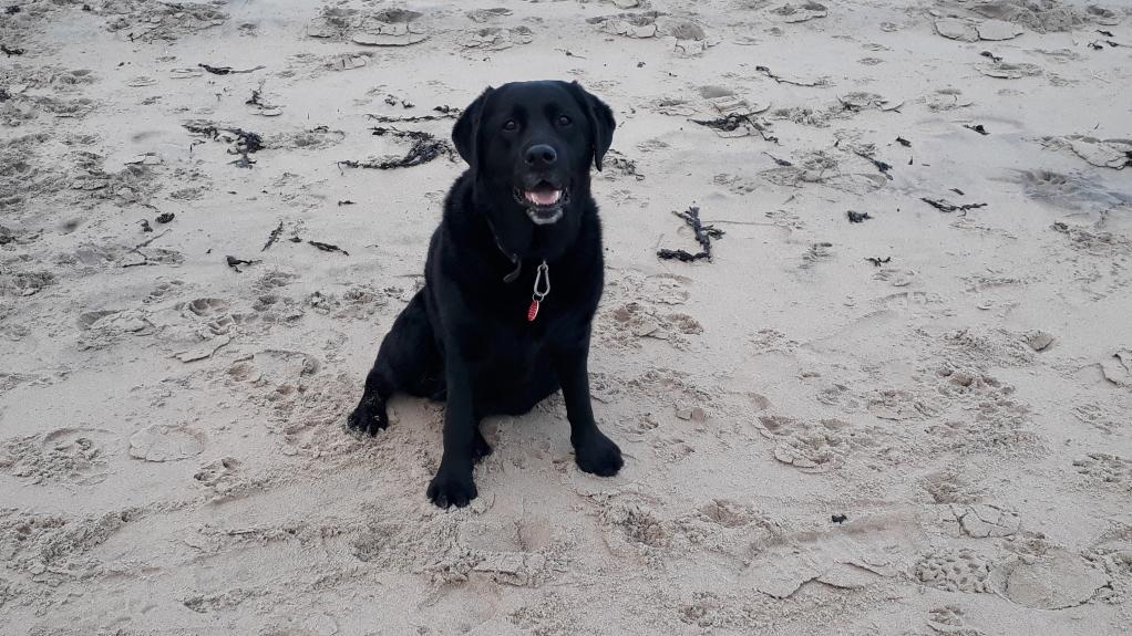 Woofus Dog Walking Whitley Bay